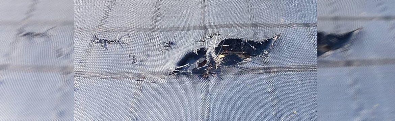 Wat zijn de gevolgen van schade aan een bassin door knaagdieren?