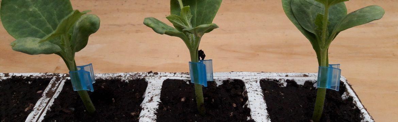 entclips om de plant