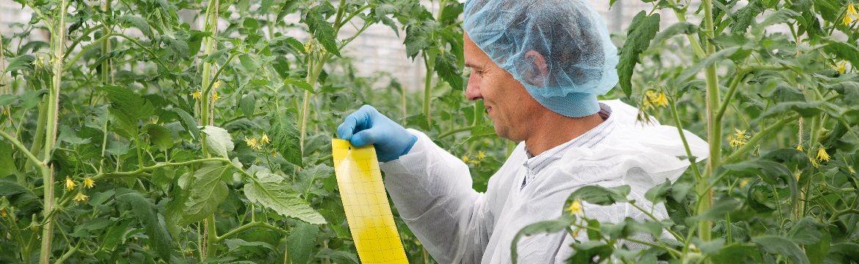 Wat is geïntegreerde gewasbescherming?