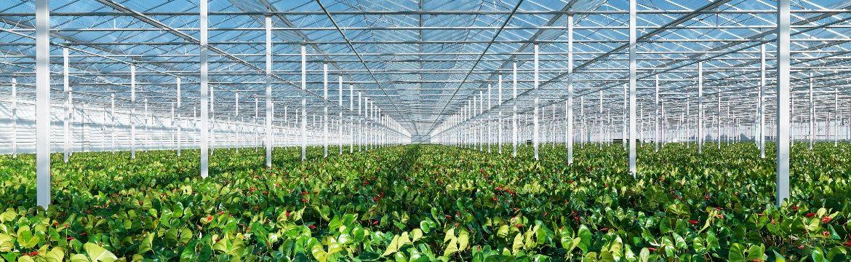 Hoe vergroot je de plantweerbaarheid?