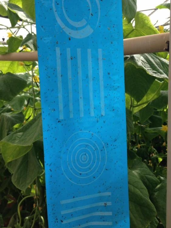 Signaalrol blauw 100m x 30cm (Optiroll Super Plus)
