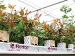 Grodan Flortop Rosa