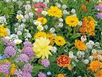 Bloemenmengsel t.b.v. bijen 250 gram